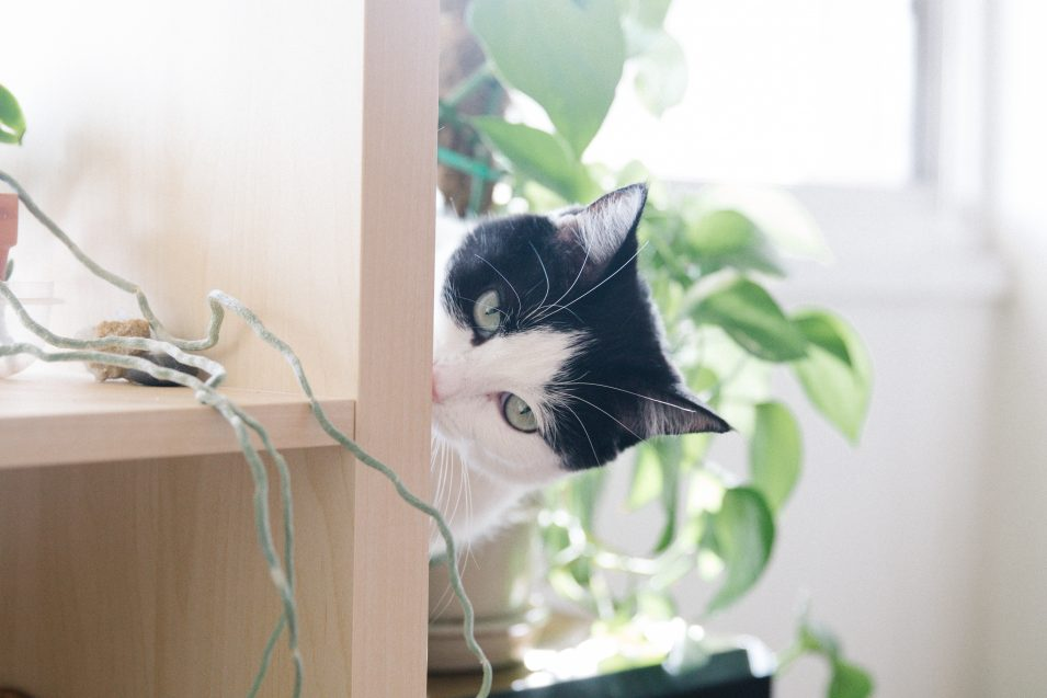 elaine-wendt-kitten