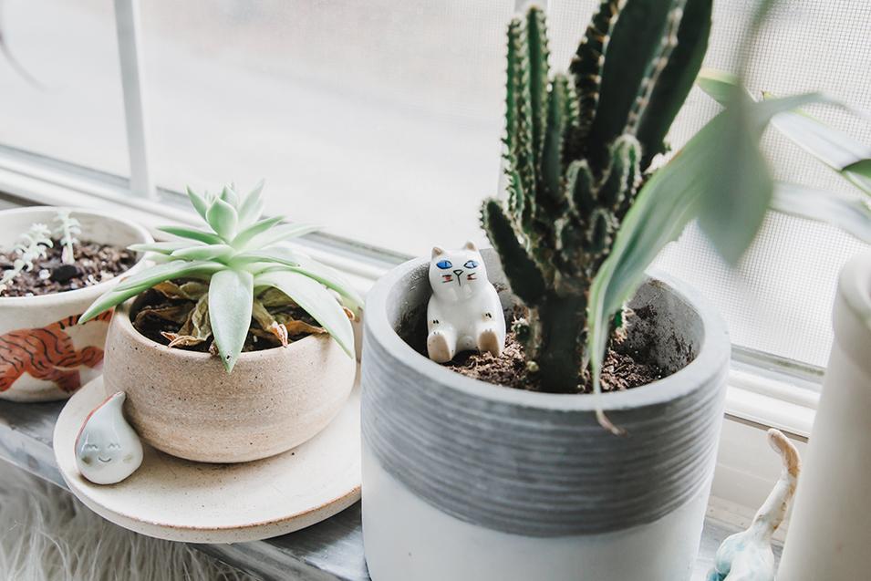 sami-fasse-plants